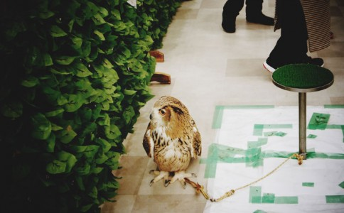 An Unusual Owl Bar Where You can Drink Coffee While Cuddling Owls-3