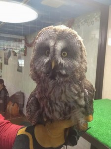 An Unusual Owl Bar Where You can Drink Coffee While Cuddling Owls-8