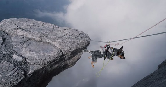 Whisper: World's First Dog To Enjoy BASE Jumping With His Master-3