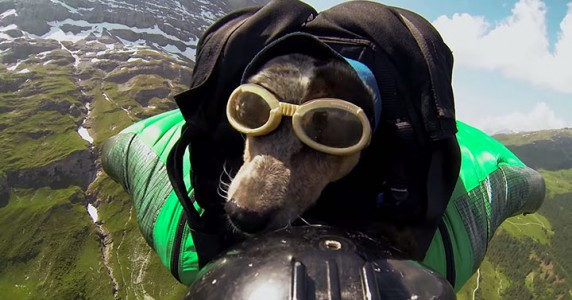Whisper: World's First Dog To Enjoy BASE Jumping With His Master-6