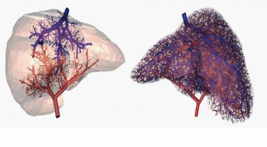 A Giant Step For Artificial Organs: Blood Vessels Synthesized By 3D Printing-4