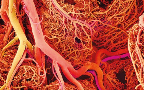 A Giant Step For Artificial Organs: Blood Vessels Synthesized By 3D Printing-6