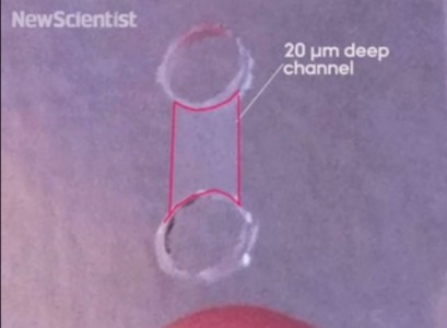 This Amazing Bacteria Feeds Exclusively On Electricity For Its Survival-