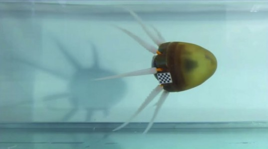 Greek Scientists Design Octopus Inspired Robot That Moves Fast Under Water-1