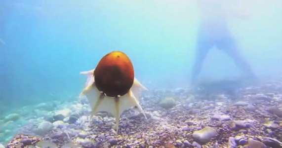 Greek Scientists Design Octopus Inspired Robot That Moves Fast Under Water-2