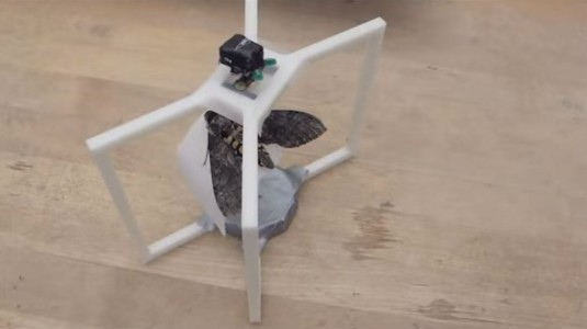 Scientists Insert elctrodes into butterflies-
