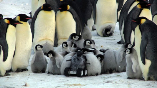Can We Use Robots To Protect Penguins From Extinction?-