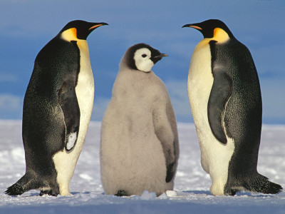 Can We Use Robots To Protect Penguins From Extinction?-2