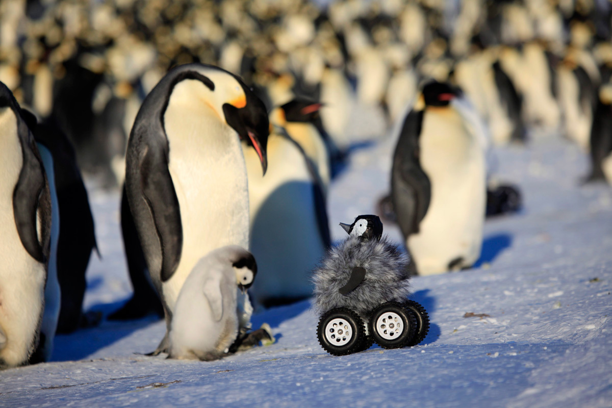 Can We Use Robots To Protect Penguins From Extinction?-3
