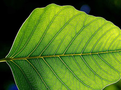 Future Smartphone Screens Will Be Inspired By Vegetable Leaves And Cobwebs-2