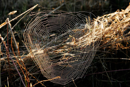 Future Smartphone Screens Will Be Inspired By Vegetable Leaves And Cobwebs-3