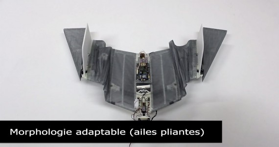 DALER-A bat inspired robot that can fly and move on the ground-3