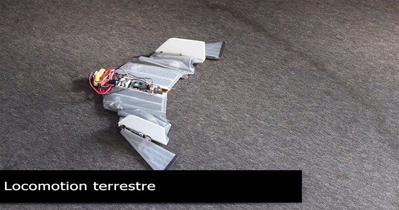 DALER-A bat inspired robot that can fly and move on the ground-8
