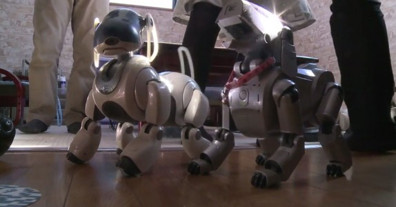 In Japan, Robot Dogs Can Now Have A Dignified Funeral Like Real Animals-2