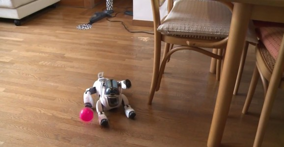 In Japan, Robot Dogs Can Now Have A Dignified Funeral Like Real Animals-6