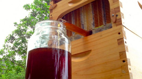 This Revolutionary Hive Enables Safe Honey Harvesting Without traumatizing Bees-1