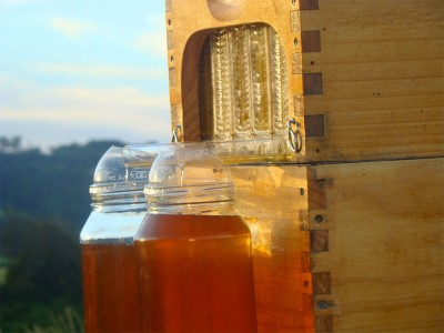 This Revolutionary Hive Enables Safe Honey Harvesting Without traumatizing Bees-3