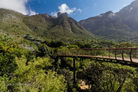 Boomslang: Take A Stroll Through This Breathtaking Walkway Above Trees-1