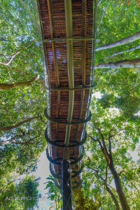Boomslang: Take A Stroll Through This Breathtaking Walkway Above Trees-10