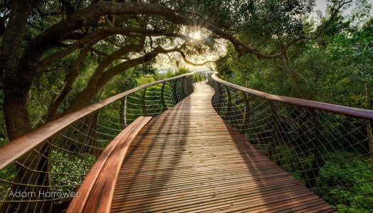 Boomslang: Take A Stroll Through This Breathtaking Walkway Above Trees-2