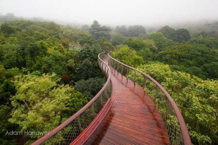 Boomslang: Take A Stroll Through This Breathtaking Walkway Above Trees-4