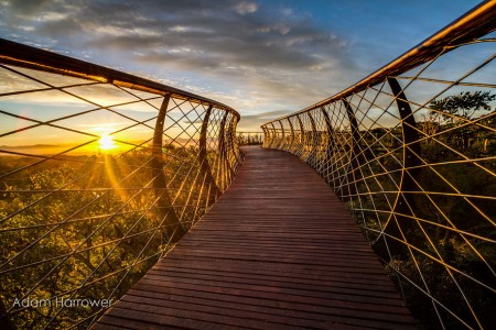 Boomslang: Take A Stroll Through This Breathtaking Walkway Above Trees-5