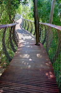 Boomslang: Take A Stroll Through This Breathtaking Walkway Above Trees-6