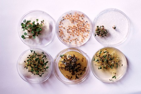 Enjoy Amazing 3D Printed Bio Food With Herbs And Mushrooms-3