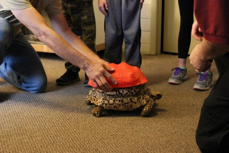 3D Printing Gives A New Life To Turtle Cleopatra-6