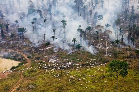Top 17 Photographs Showing Alarming Devastation Of Earth-8