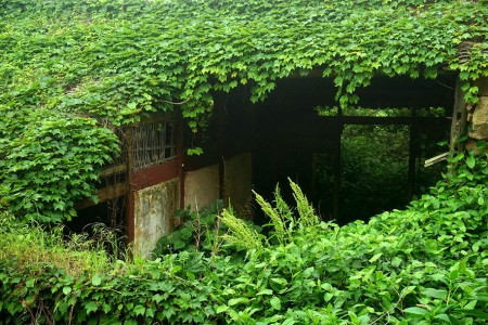 See How Nature Relcaims A Beautiful Abandoned Fishing Village In China?-3