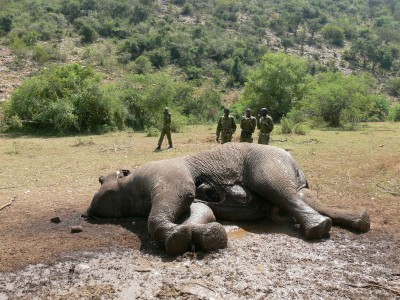 Air Shepherd: Drones To Fight Against Elephant Poaching-