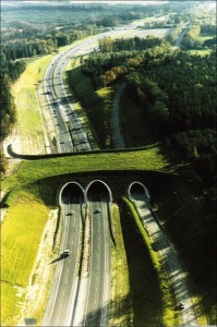 Eco-ducts: Ingenious Bridges To Save Thousands Of Animals-1
