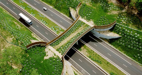 Eco-ducts: Ingenious Bridges To Save Thousands Of Animals-3
