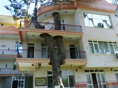 12 Green Tree Houses Built Around The Trees Without Cutting Them-4