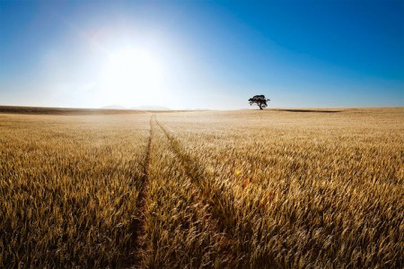 Most Beautiful Photographs To Reveal The Beautiful Namibian Desert-3