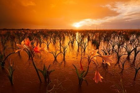Most Beautiful Photographs To Reveal The Beautiful Namibian Desert-43