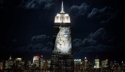 Photos Of Endangered Animals Projected On Empire State Building To Raise Awareness-