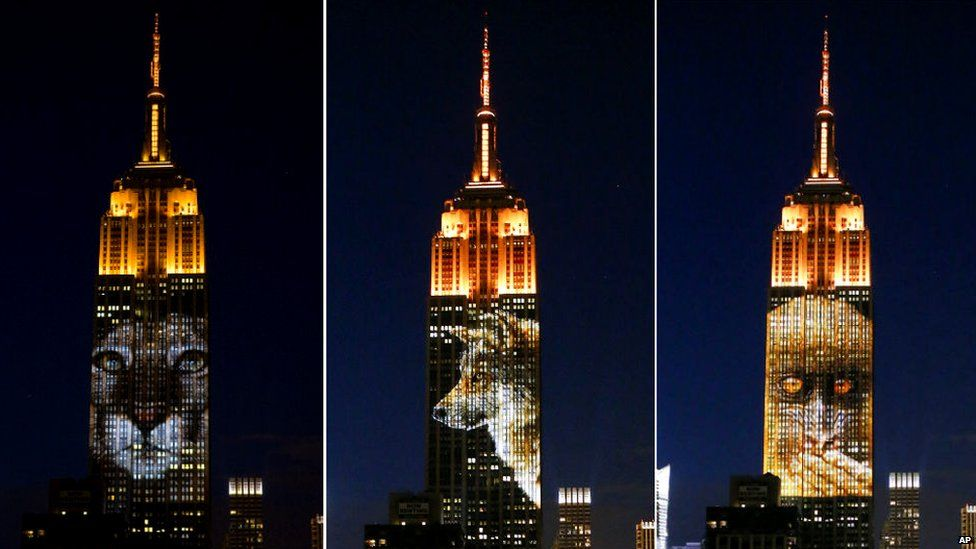 Photos Of Endangered Animals Projected On Empire State Building To Raise Awareness-2