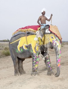 20 Elephants Decorated In Thousand Colors For The Jaipur Elephant Festival-