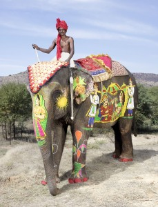 20 Elephants Decorated In Thousand Colors For The Jaipur Elephant Festival-10