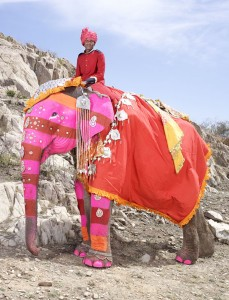 20 Elephants Decorated In Thousand Colors For The Jaipur Elephant Festival-11