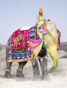 20 Elephants Decorated In Thousand Colors For The Jaipur Elephant Festival-14
