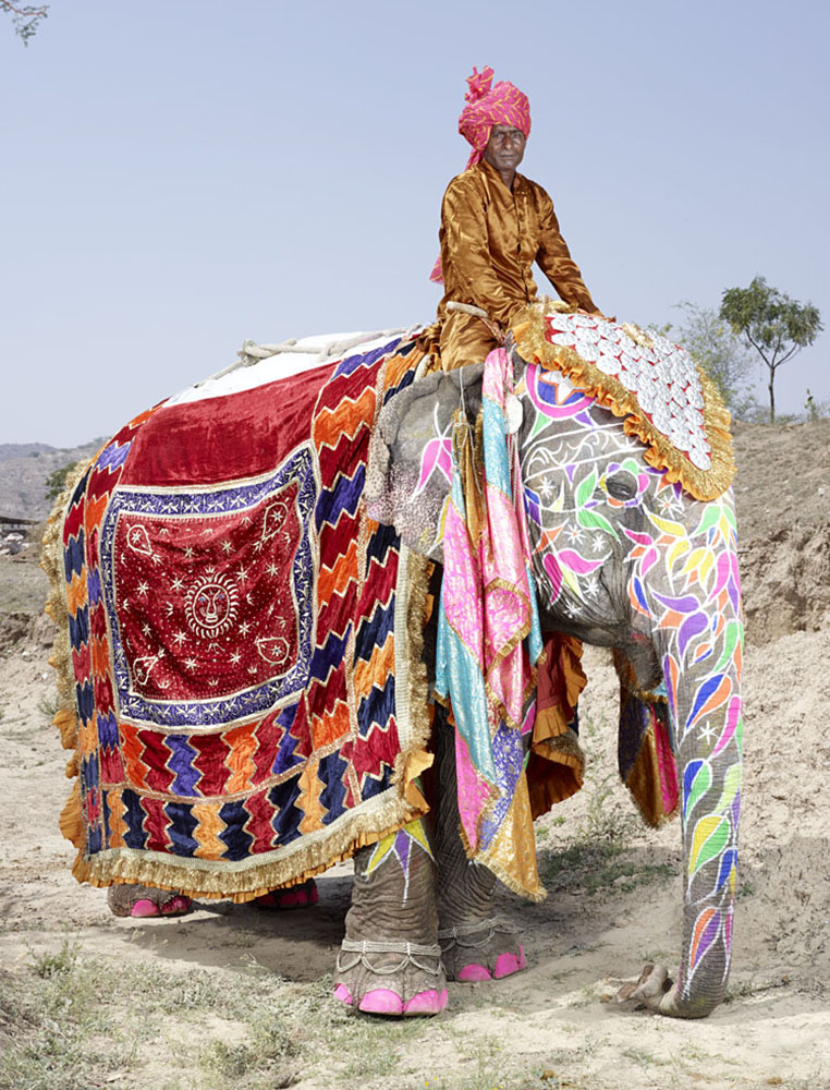 20 Elephants Decorated In Thousand Colors For The Jaipur Elephant Festival-15