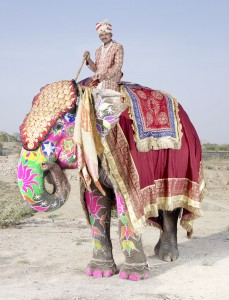 20 Elephants Decorated In Thousand Colors For The Jaipur Elephant Festival-17