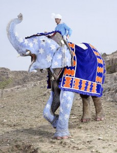 20 Elephants Decorated In Thousand Colors For The Jaipur Elephant Festival-18