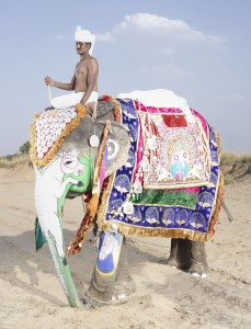 20 Elephants Decorated In Thousand Colors For The Jaipur Elephant Festival-2