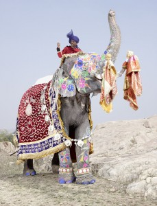 20 Elephants Decorated In Thousand Colors For The Jaipur Elephant Festival-3