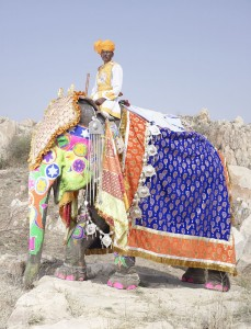 20 Elephants Decorated In Thousand Colors For The Jaipur Elephant Festival-5