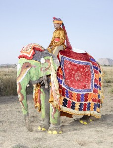 20 Elephants Decorated In Thousand Colors For The Jaipur Elephant Festival-6